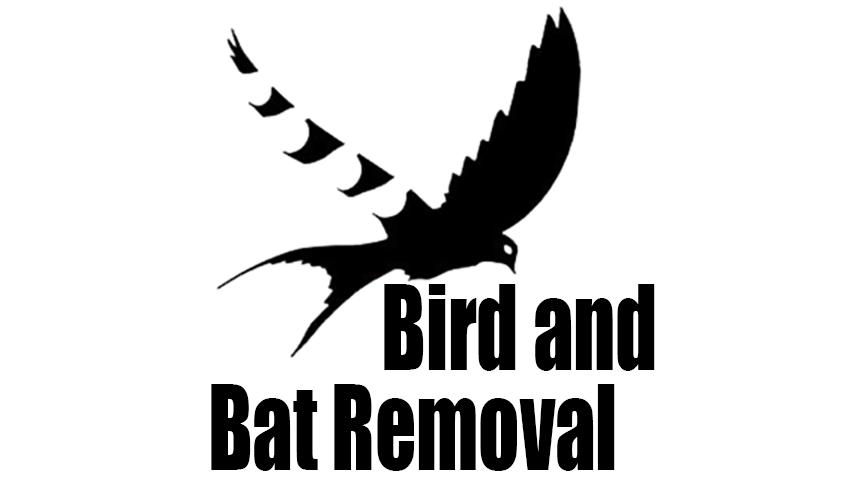 Bird & Bat Control
